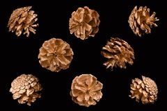 Golden pine cones on a black background Zdjęcia Royalty Free