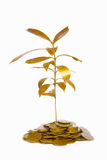 Golden plant between gold coins Stock Photography