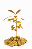 Golden plant between gold rocks Stock Photography
