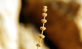 Golden plant Stock Image