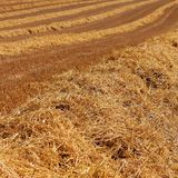 Golden Ploughed Wheat Field Textures Royalty Free Stock Photo