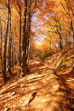 Golden polish autumm Royalty Free Stock Images