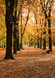 Golden polish autumn royalty free stock photography
