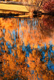 The golden pond. Reflections of fall foliage in a village pond. Taken in Minneapolis, Minnesota, USA Royalty Free Stock Photos
