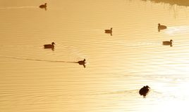 Golden pond Stock Photo