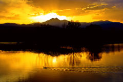 On Golden Ponds. A golden sunset with a duck swimming by on Golden Ponds and the mountains on the horizon Stock Photos