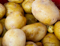 Golden potatoes Stock Image