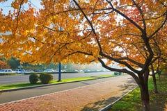 Golden prunus sibirica trees Royalty Free Stock Photo