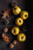 Golden Quinces Royalty Free Stock Photo