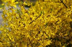 Golden rain Royalty Free Stock Image