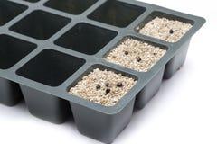 Golden rain seeds Stock Image