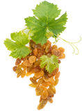 Golden raisins and leaves of grape Royalty Free Stock Image