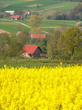 Golden. On polach on the background of the village Royalty Free Stock Photo