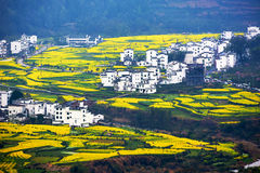 The golden rape flowers terraced fields and Anhui buildings Stock Images