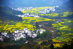 The golden rape flowers terraced fields and Hui style architecture Royalty Free Stock Photo