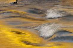 Golden rapids. Fall reflections in creek wi Royalty Free Stock Images