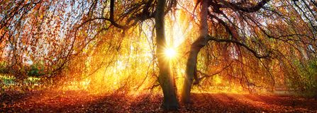 Golden rays of the autumn sun Royalty Free Stock Image