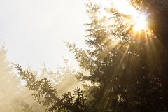 Golden rays of sunlight shining through trees Stock Photo
