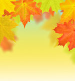 Golden and red autumn maple leaves half frame Royalty Free Stock Photos