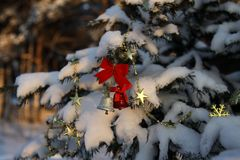 Golden and red bells on the branch of the Christmas tree covered Royalty Free Stock Images