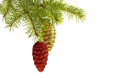 Golden and red cones on fir tree Royalty Free Stock Images