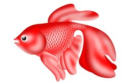 Golden red fish with scales isolate. Golden red fish with scales on a white stock illustration