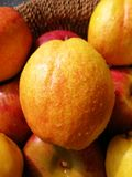 Golden and Red Fresh Pear. A juicy ripe golden and red pear among some apples and pears stock photo