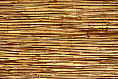 Golden reed background Stock Photography