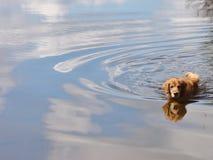 Golden reflection Stock Photo