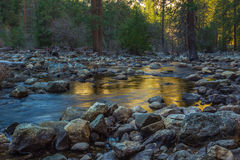 Golden Reflection. Sunlight Reflection In Calm Water Of Stream Flowing Through Rocky  Streambed Royalty Free Stock Images