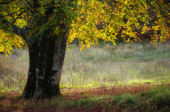 Golden reflection of the tree leaves in the sunlight Stock Photography