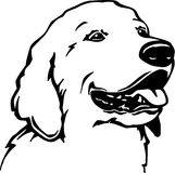 Golden Retriever. Line Art Illustration of a Golden Retriever Stock Images