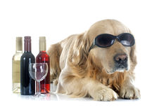 Golden retriever and bottle Stock Photo