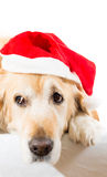 Golden retriever with christmas hat Royalty Free Stock Image