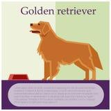 Golden retriever colourful postcard Stock Photo
