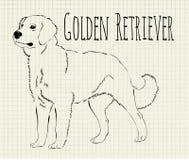 Golden retriever da ilustração do vetor Fotografia de Stock Royalty Free