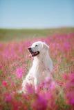 Golden retriever de chien en fleurs Image stock