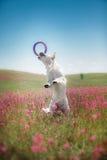 Golden retriever de chien en fleurs Photos stock