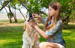 Golden retriever de laine de peignée de fille de propriétaire en parc Image stock