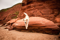 Golden retriever an den roten Felsen Lizenzfreies Stockfoto