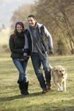 Golden retriever di camminata delle coppie nel paese Immagini Stock