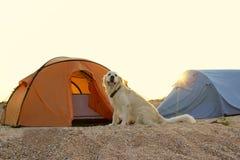 Golden retriever die tent en toestel voor een stijging bewaken royalty-vrije stock foto