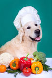 Golden Retriever dog cooking. Healthy food Stock Photography