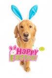 Golden Retriever Dog holding Easter Sign Royalty Free Stock Photos
