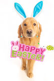 Golden Retriever Dog holding Easter Sign Royalty Free Stock Photography