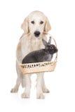 Golden retriever dog holding a rabbit in a basket Royalty Free Stock Photos