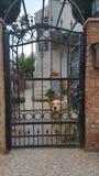 Golden retriever. Dog looking from garden door Royalty Free Stock Image