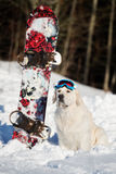 Golden retriever dog with snowboard Royalty Free Stock Images