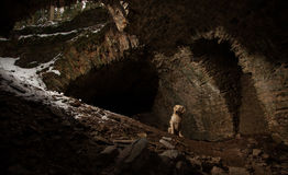 Dog in Tunnel Royalty Free Stock Image
