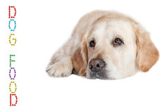 Golden Retriever Dog with vertical inscription DOG FOOD. Closeup view of the Golden Retriever Dog lying on the white background. Vertical inscription DOG FOOD Royalty Free Stock Images